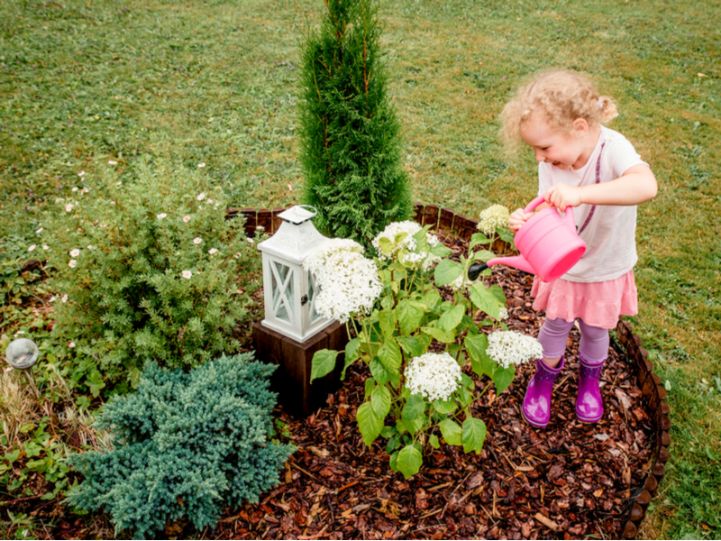 Buy Play Bark and Play Wood Chips | BARK UK Online