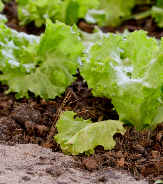 Buy Peat Free Compost Online   BARK UK Online